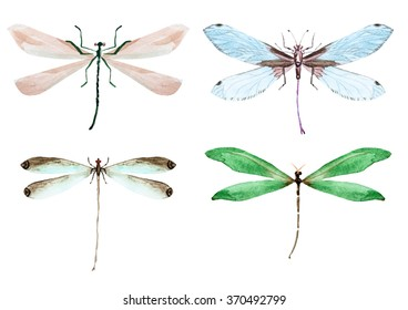 watercolor set dragonflies, green, blue, brown dragonfly on a white background