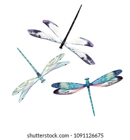 Watercolor set of dragonfly, isolated illustration