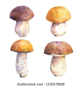 Watercolor set of edible mushrooms. Different types of boletus mushrooms