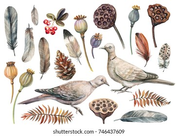 watercolor set of elements, bird pigeon, poppy seeds, lotus, cone, dry leaves, feathers and berries