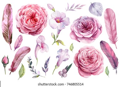 watercolor set of elements, clipart, roses flowers, leaves, pink feathers