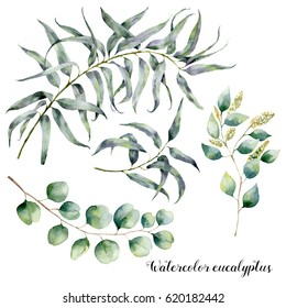 Watercolor set with eucalyptus branch. Hand painted floral illustration with leaves and branches of seeded and silver dollar eucalyptus isolated on white background. For design, print and fabric.