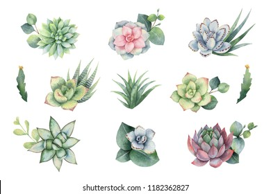 Watercolor set with eucalyptus leaves and succulents . Illustration for wedding invitation, save the date or greeting design. Spring or summer flowers with space for your text.