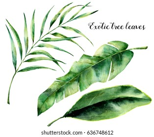 Watercolor set with exotic tree leaves. Hand painted palm branch and leaf of magnolia. Tropic plant isolated on white background. Botanical illustration. For design, print or background.