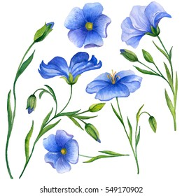 Watercolor set with flax flowers isolated on white background, hand drawn illustration.