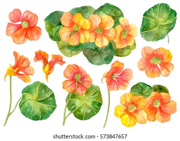Watercolor set of floral elements, hand drawn illustration of nasturtium flowers, orange flowers isolated on white background.