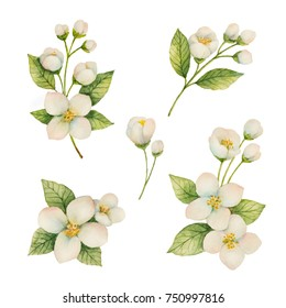 Watercolor set of flowers and branches Jasmine isolated on a white background. Floral illustration for design greeting cards, wedding invitations, natural cosmetics, packaging and tea.