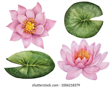 Watercolor set of flowers, hand drawn illustration of water lilies, bright floral elements isolated on a white background.