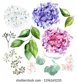 Watercolor set with flowers hudrangea and leaves. Illustration