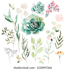 Watercolor set with flowers of succulents and leaves. Illustration