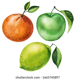 Watercolor set fruit hand drawing decorative background. Print for textile, cloth, wallpaper, scrapbooking