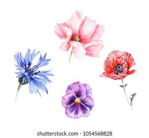 Watercolor set of garden flowers: red poppy, cornflower,  viola and pink cosmos