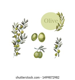 Watercolor set of green olive branches on a white background. Hand-drawn with watercolor paints. Great for all types of design.