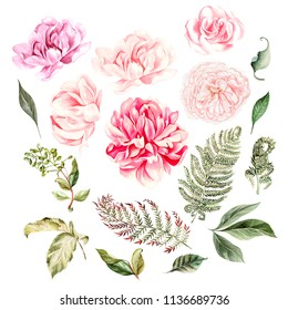 Watercolor set. Hand painted rose and peony flowers. Floral illustration isolated on white background. For design and textile.