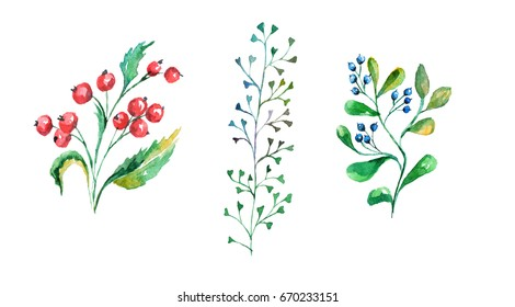 Watercolor set of herbs with berries on isolated background.