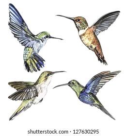 watercolor set hummingbirds