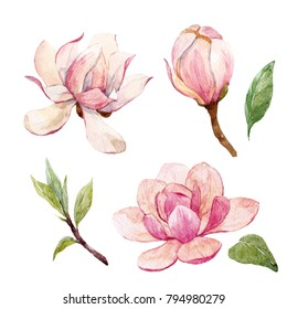 Watercolor set illustration of a branch with flowers pink Magnolia flower spring card