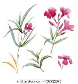 Watercolor set illustration of a branch of a pink oleander flower, Leaves and bud
