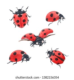 Watercolor set illustration   cute red bugs, ladybug