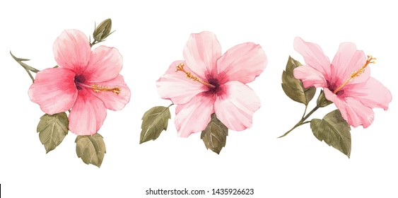 Watercolor set illustration of a pink hibiscus flower. isolated illustration of a tropical plant