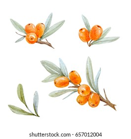 Watercolor set of illustrations of berries and sea buckthorn leaves, watercolor logo