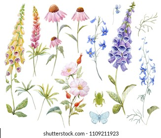 Watercolor set of illustrations, wildflowers, pink dog rose with berries, lupins, yellow and blue foxglove, leaves and twigs, pink echinacea. Beetle and blue butterfly. Botanical Spring Collection
