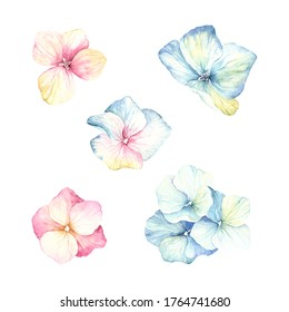 Watercolor set of inflorescence flowers hydrangea pink and blue colors. Floral illustration isolated on white background.