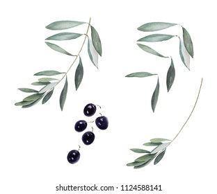Watercolor set of isolated black olives, olive leaves and branches. Could be used in many different combinations.