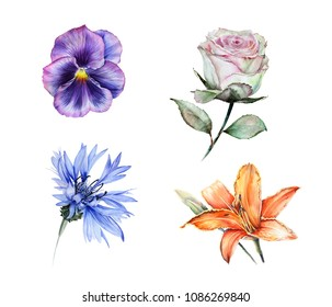 Watercolor set of isolated garden flowers: blue cornflower, orange lily, green rose