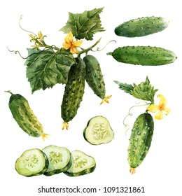 Watercolor set of isolated illustrations, cucumber on a branch, cucumber slices, food illustration