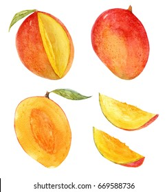 Watercolor set of isolated mango objects, leaves and individual elements