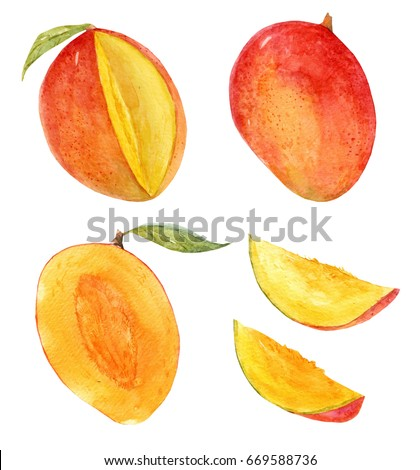 Royalty Free Stock Illustration Of Watercolor Set Isolated Mango