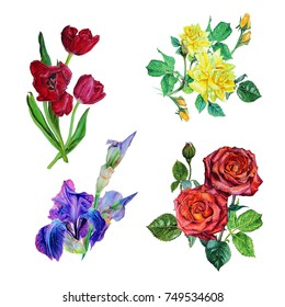 Watercolor set of isolated on white background flowers bouquets: red tulips and roses, yellow dogrose , purple irises.