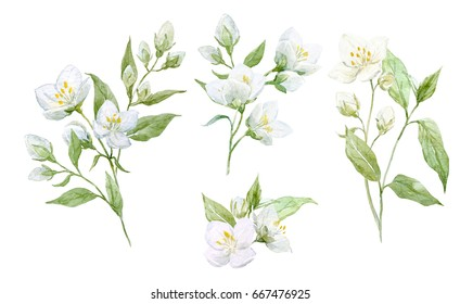 Watercolor set of jasmine flower composition, twigs and leaves, isolated objects on white background