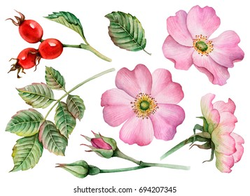 Watercolor set of leaves, flowers and rose hip berries, hand drawn floral illustration isolated on white background.