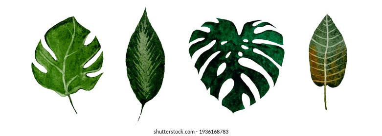 watercolor set of leaves, isolated on white background