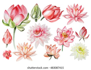 Lotus Watercolor Images Stock Photos Vectors Shutterstock