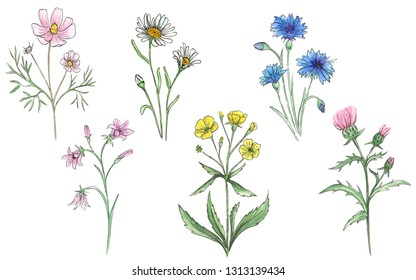 Watercolor set of meadow flowers.
