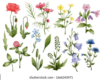 Watercolor set with meadow flowers, poppy, cosmos, buttercup, lunatic, clover, myosotis, bell, cornflower, shepherd's purse. Watercolor botanical illustration isolated on white.