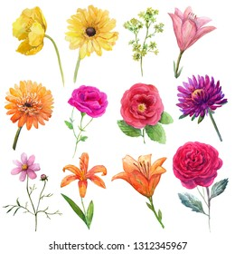 Watercolor set mexican flowers-yellow poppy,orange gerbera,purple astra,pink and red roses,orange lilies.
