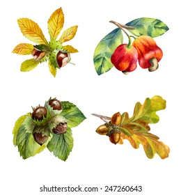 watercolor set of  nuts on white background