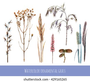 Watercolor set of ornamental grass. Winter dry grass and acorns