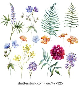 Watercolor set of peony flowers, lupins and other wildflowers, fern leaves. Isolated objects on white background