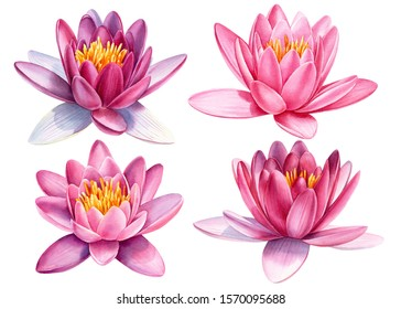 watercolor set of pink flowers, lotuses on a white isolated background, hand drawing, botanical painting, poster