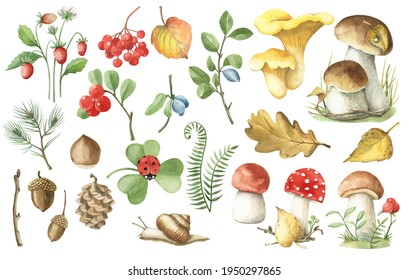 Watercolor set of plant elements. Mushrooms, leaves, nuts, herbs, berries, snail. Autumn illustration.