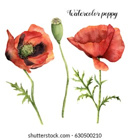 Watercolor set with poppies. Hand painted floral illustration with leaves, seed capsule and branches isolated on white background. For design, print and fabric.