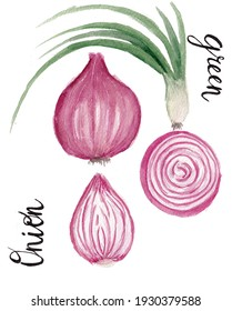 Watercolor set, red onion, onion slice, green onion on a white background