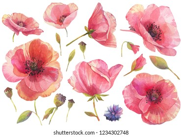 Watercolor set with red poppy flowers. Hand drawn illustration on white background.