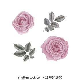 Watercolor set rose flowers and leaves, isolated on white background.