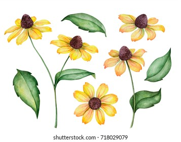 Watercolor set of rudbeckia flowers, hand drawn botanical illustration isolated on a white background.